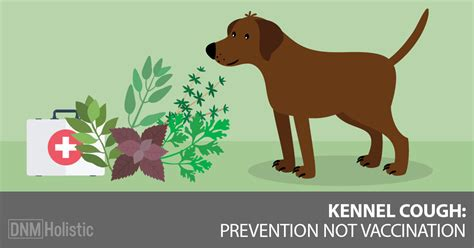 bordetella vaccine dogs cat kennel cough vaccine canine cough bordetella vaccines for dogs cost of kennel