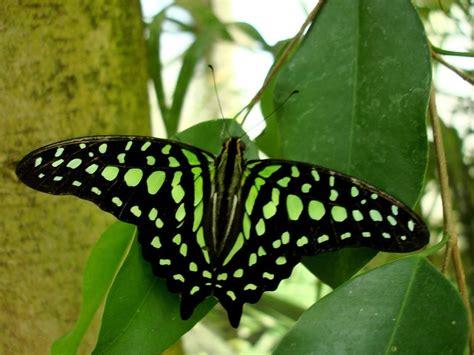 imagenes mariposas mas bonitas mundo mundo de las mariposas tr 243 pico en sud 225 frica ser turista