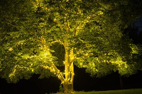how to put lights on tree tree lights for and summer yard envy