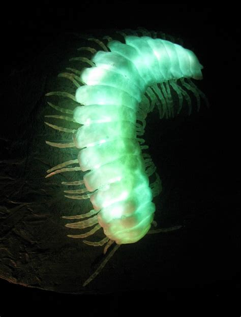 Glowing Animals top 10 amazing bioluminescent animals on planet earth