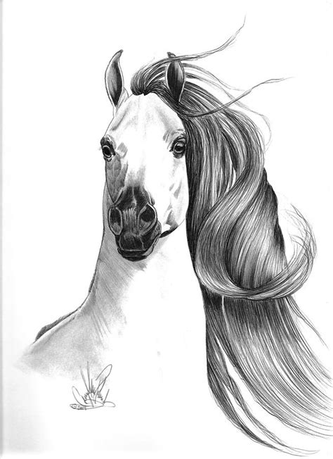 mustang horse drawing how to draw a mustang horse head