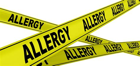 what can you give a for allergies are purebred dogs more likely to allergies
