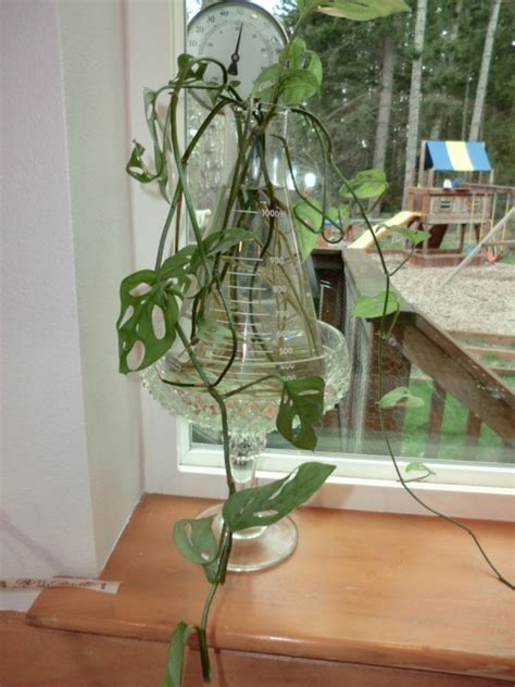 Plants That Grow In Water Vases by Growing Plants In Water Thriftyfun