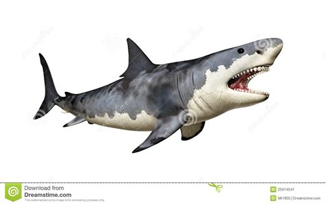 Great White Shark Clip by Great White Shark Clipart Megalodon Pencil And In Color