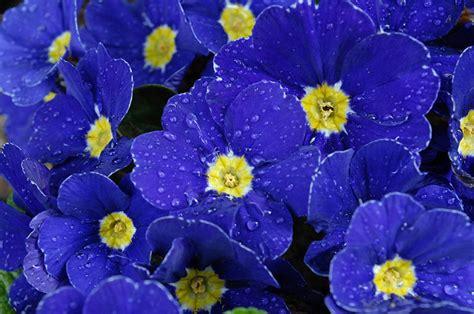 fiori autunno inverno i fiori dell autunno inverno floricoltura michielin