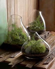 modern glass terrarium indoor garden planter nova68 modern design