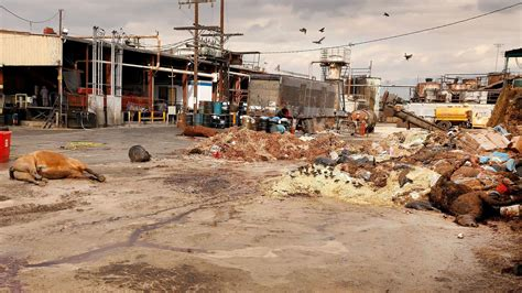 render plant new rules aim to keep stench of rotting meat and carcasses out of l a neighborhoods la times