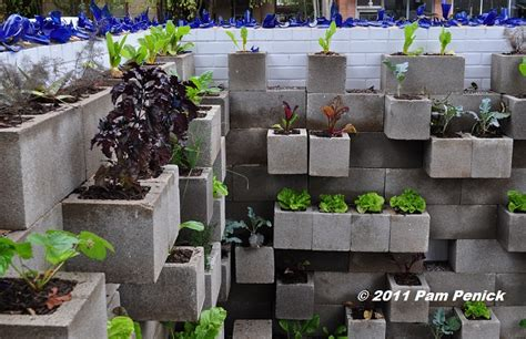 Edible Wall Cinderblock Wall Vegetable Garden Wows At Big Cinder Block Vegetable Garden