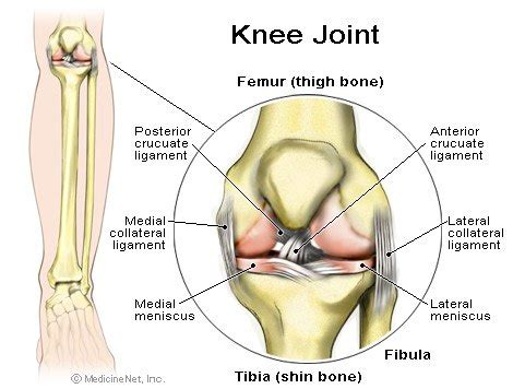 diagram of ligaments in the knee what is an acl pcl and their functions sports knee
