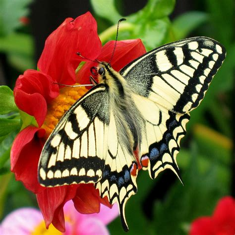 butterflies images butterfly
