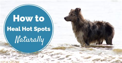 natural remedies  dogs hot spots