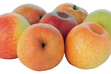 papple pear apple hybrid fruit to be launched in uk fun news digital spy