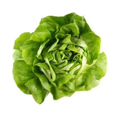imagenes de lechugas verdes lechuga romana verde x 220 gr escarola alimentos