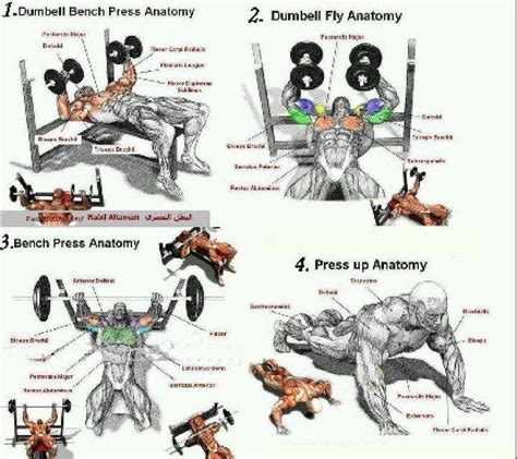 14 best chest tri exercises images on health