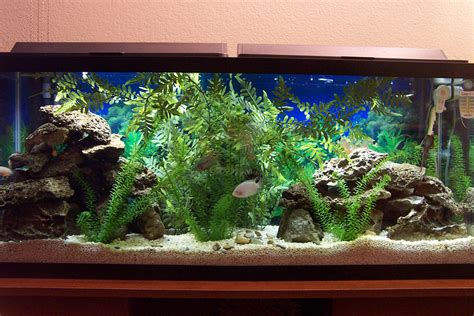 cichlid aquascape cichlids com tank exles new aquascape
