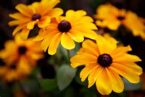 file autumn flowers 10376232316 jpg wikimedia commons