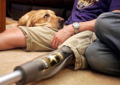 ptsd therapy dogs ptsd archives veteran traveler