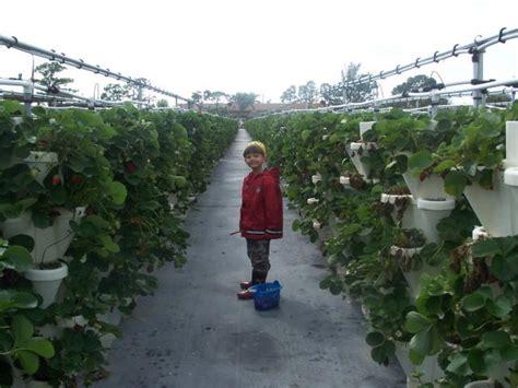 u vegetables florida southeast florida southeast florida u farms find a