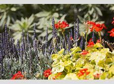 The Inside Scoop on the Getty's Spring Garden   The Getty Iris Kicker