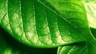 Similar green leaf wallpapers green leaf 1920x1080px 325 9 kb