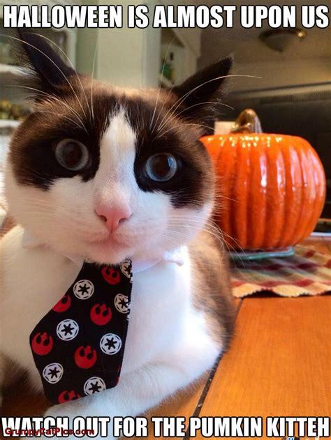 Halloween Cat Meme - halloween grumpy cat meme