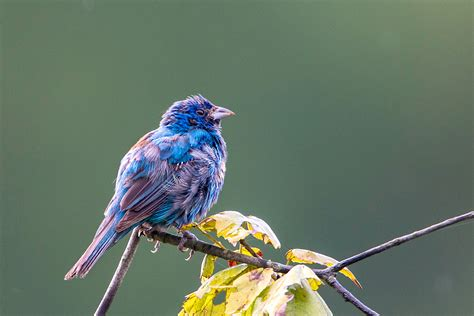 recent images of a variety of birds stephen l tabone