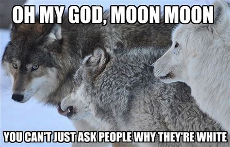 Wolf Memes - 13 of the best memes from 2013