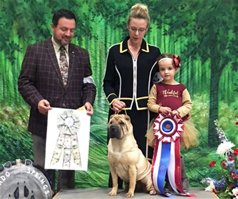 kennels colorado springs colorado springs kennel club monday november 13 2017 canine chronicle