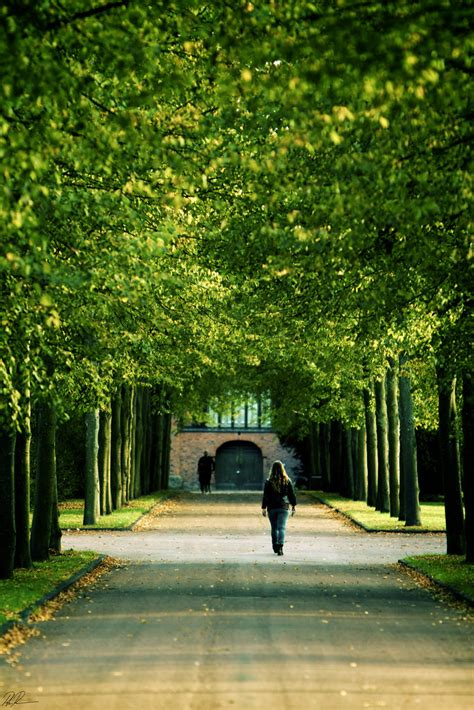 Green Ceilings by Natures Green Ceiling Yet Another Avenue From Neighborh Flickr
