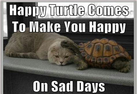 Cheer Up Cat Meme - happy turtle comes to make you happy on sad days animals