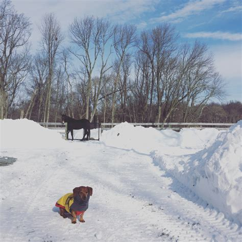 jonas on a farm in winter books winter jonas on the farm ammo the dachshund