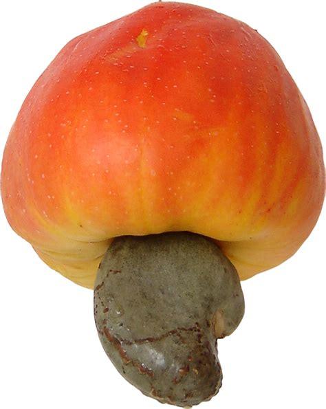 3 fruits in file cashew brazil fruit 3 png wikimedia commons