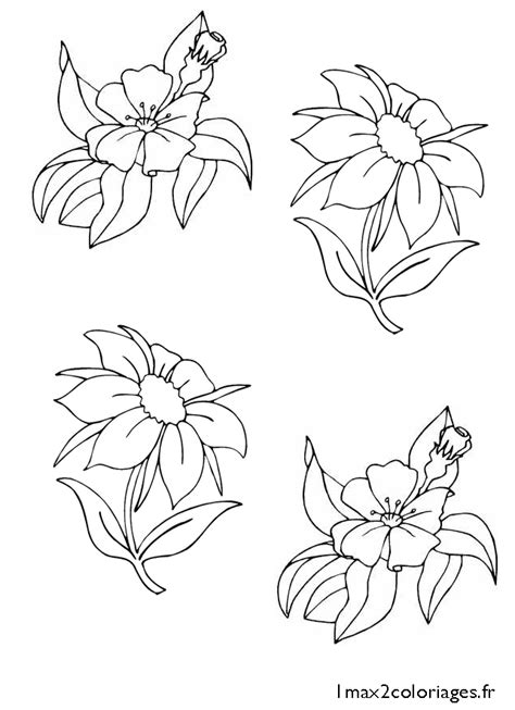 free coloring pages of cherry blossom branch