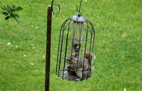 Squirrel Bird Feeder Squirrel Proof Bird Feeder Cage Garden Design And