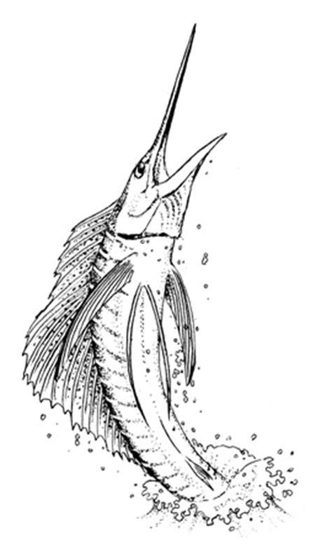 sailfish coloring pages image gallery sailfish drawings