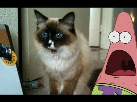 Surprised Cat Meme - best of surprised patrick star gifs youtube