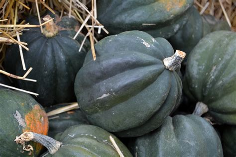 Table Squash by In The Garden With Dallas Arboretum S Dave Forehand