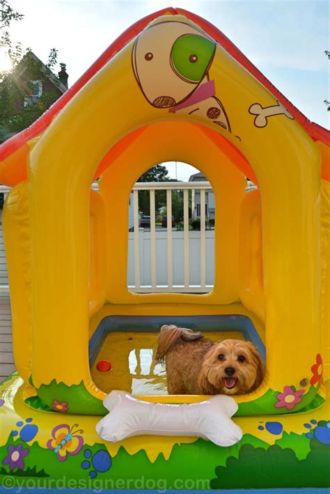 dog house with pool is it a dog house is it a pool it s both yourdesignerdog