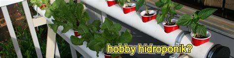 Jual Bibit Hidroponik Kaskus memulai menanam selada hidroponik untuk pemula kaskus