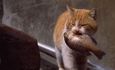 Wellness Treats Crunchy Chicken Snack Anjing Kucing Penasaran Kenapa Kucing Suka Ikan Padahal Ikan Berdak