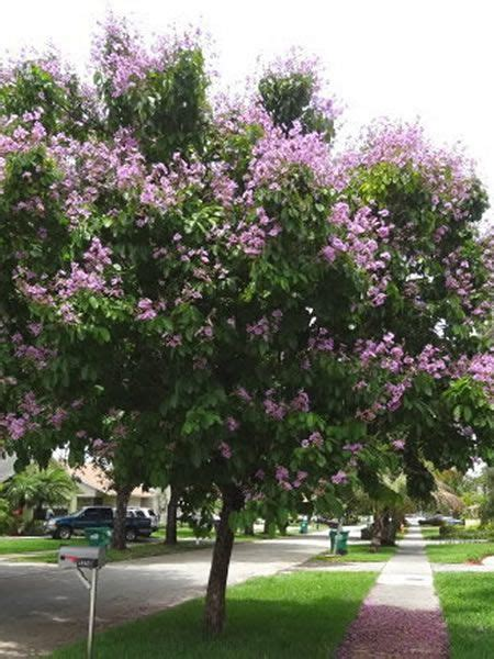 top 28 crepe myrtle root system invasive top 28 crepe