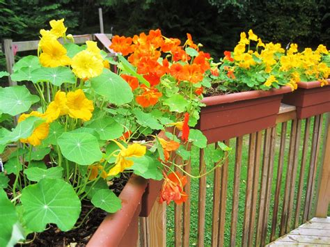 deck rail planters lowes deck rail planters choice and appearance the home
