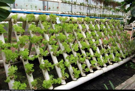 cara membuat hidroponik tanpa greenhouse budidaya tanaman secara hidroponik bertanam hidroponik