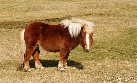 recherche poney ou miniature 224 vendre cheval 224