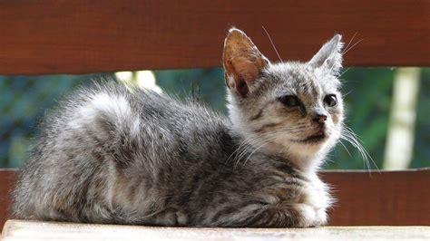 Kitten Bloody Stool Diarrhea by Kitten Diarrhea Cattention