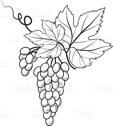 imagenes blanco y negro para estar blanco y negro racimo de uvas arte vectorial de stock y