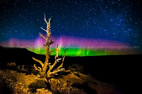 northern lights and tree