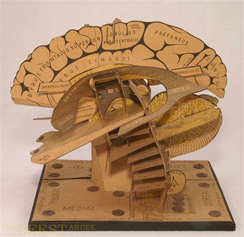 How To Make A Paper Brain - paper model of the brain fleaglass