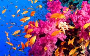 coral reef color genesis nature coral reef habitats