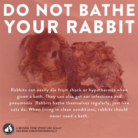 Some On The Go With The Rabbit Travel Vibe by Don T Bathe Rabbits Spooky And Scully